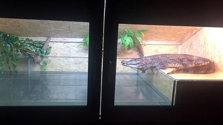 Родина франківців утримує вдома понад сотню змій, ящірок і крокодила 10