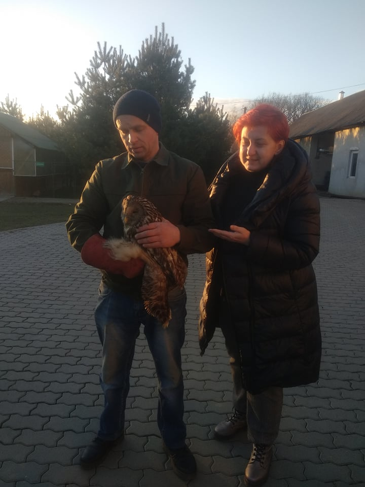 Двох травмованих сов залишать у Галицькому парку 2