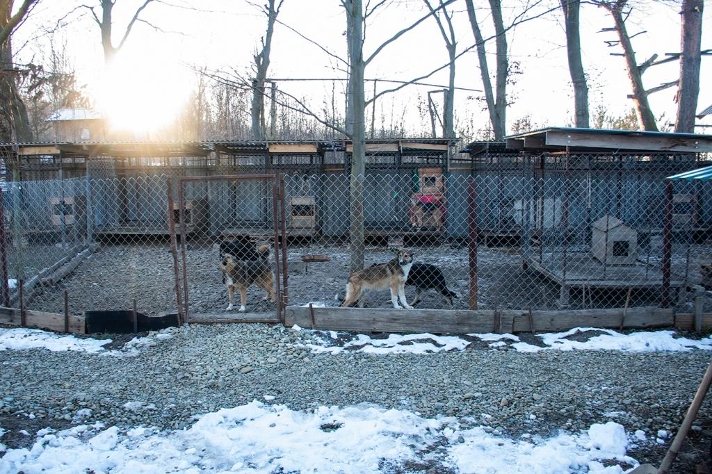 У Франківську запрацював перший комунальний пункт перетримки собак 4