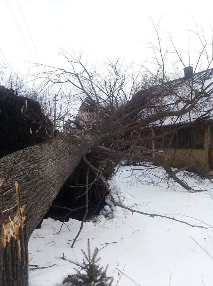 Негода на Прикарпатті: шквальний вітер зриває дахи і валить дерева у 5 районах 6