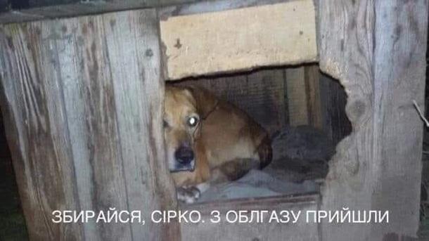 У соцмережах люто висміяли нардепа Брагара, який запропонував пенсіонерці розрахуватися за газ собакою 10