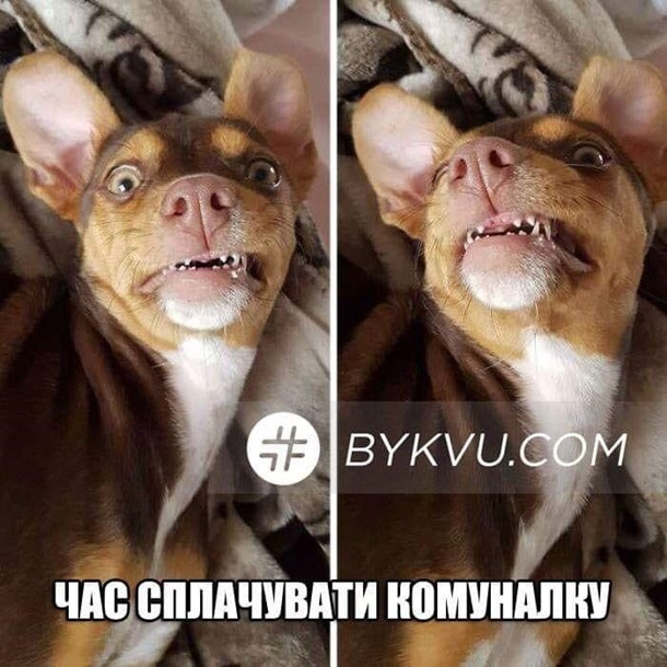 У соцмережах люто висміяли нардепа Брагара, який запропонував пенсіонерці розрахуватися за газ собакою 16