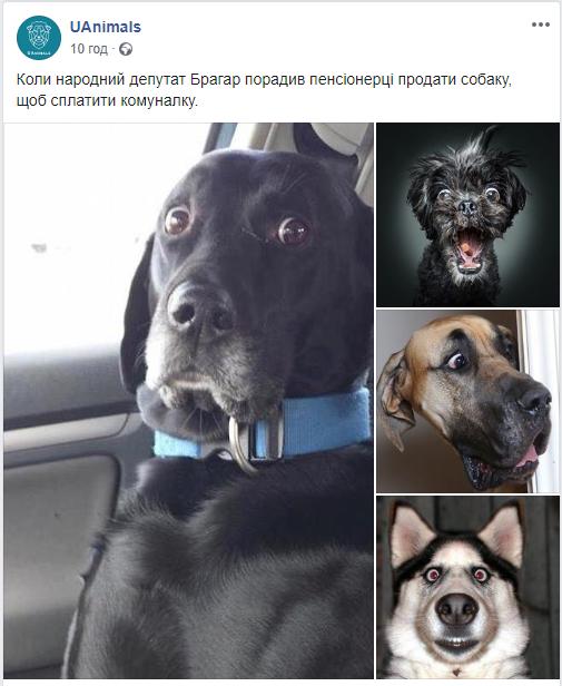 У соцмережах люто висміяли нардепа Брагара, який запропонував пенсіонерці розрахуватися за газ собакою 134