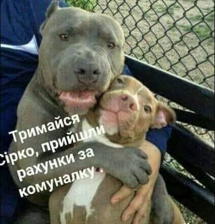 У соцмережах люто висміяли нардепа Брагара, який запропонував пенсіонерці розрахуватися за газ собакою 22