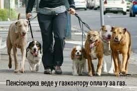 У соцмережах люто висміяли нардепа Брагара, який запропонував пенсіонерці розрахуватися за газ собакою 24