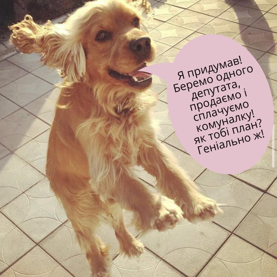 У соцмережах люто висміяли нардепа Брагара, який запропонував пенсіонерці розрахуватися за газ собакою 34