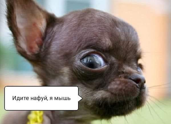 У соцмережах люто висміяли нардепа Брагара, який запропонував пенсіонерці розрахуватися за газ собакою 38