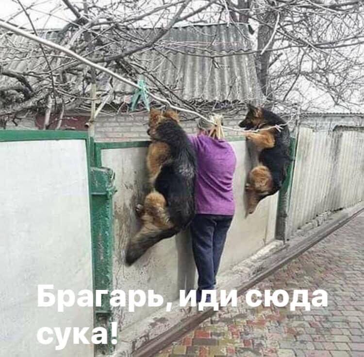 У соцмережах люто висміяли нардепа Брагара, який запропонував пенсіонерці розрахуватися за газ собакою 40