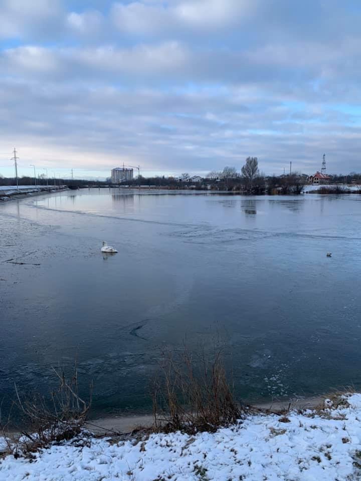 На Німецькому озері рятували лебедя, що примерз до криги 6