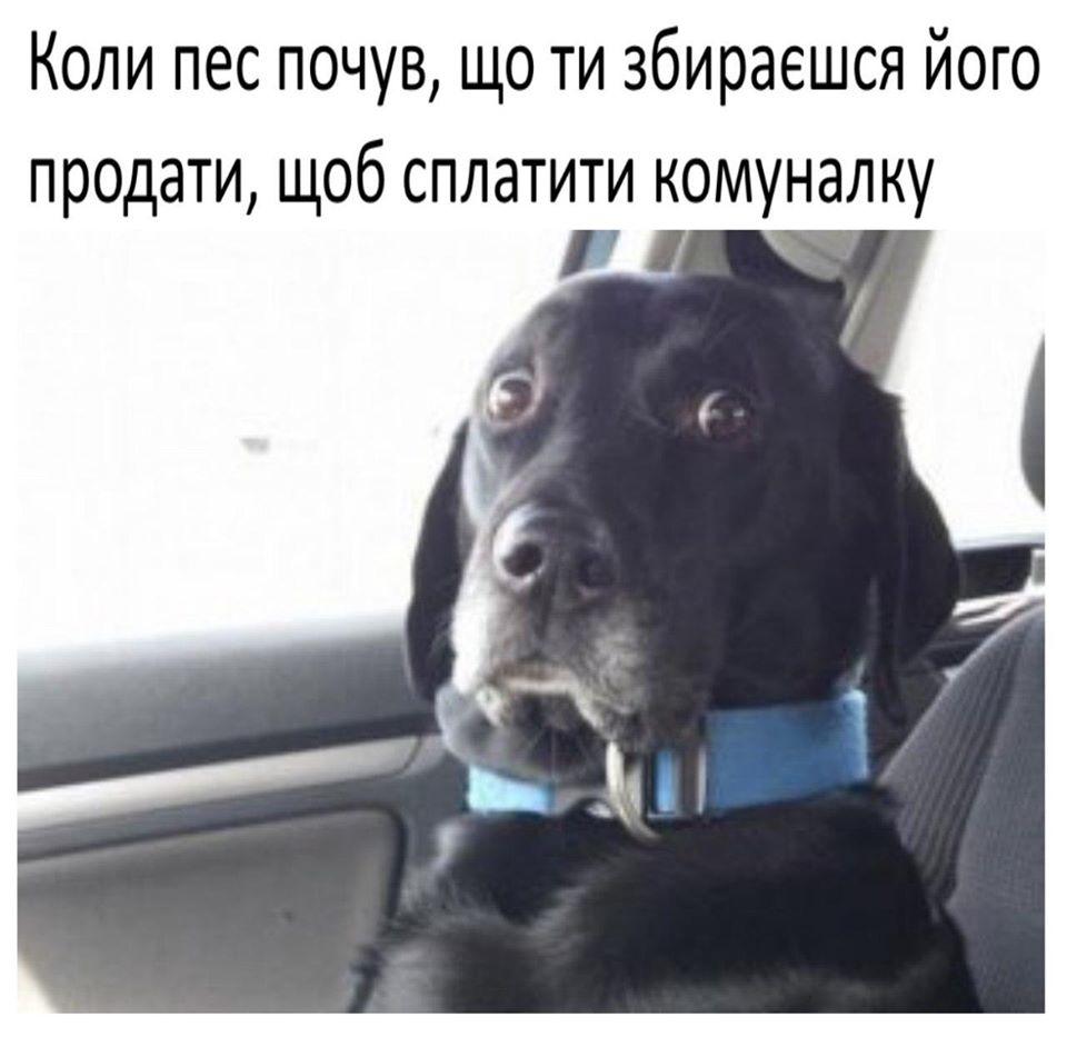 У соцмережах люто висміяли нардепа Брагара, який запропонував пенсіонерці розрахуватися за газ собакою 50