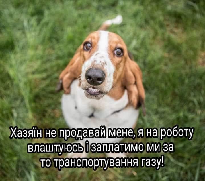 У соцмережах люто висміяли нардепа Брагара, який запропонував пенсіонерці розрахуватися за газ собакою 56