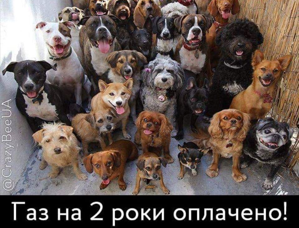 У соцмережах люто висміяли нардепа Брагара, який запропонував пенсіонерці розрахуватися за газ собакою 58