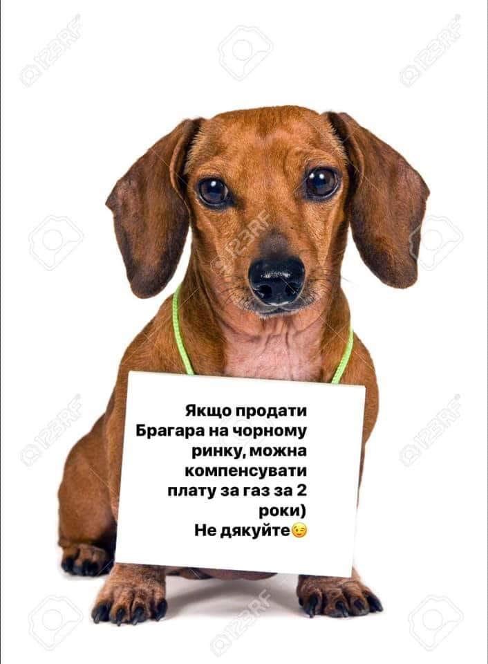 У соцмережах люто висміяли нардепа Брагара, який запропонував пенсіонерці розрахуватися за газ собакою 62