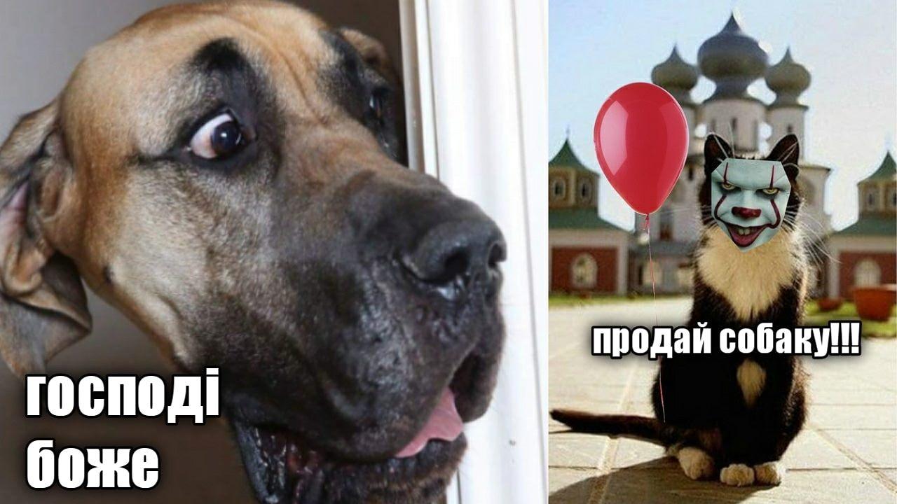У соцмережах люто висміяли нардепа Брагара, який запропонував пенсіонерці розрахуватися за газ собакою 68
