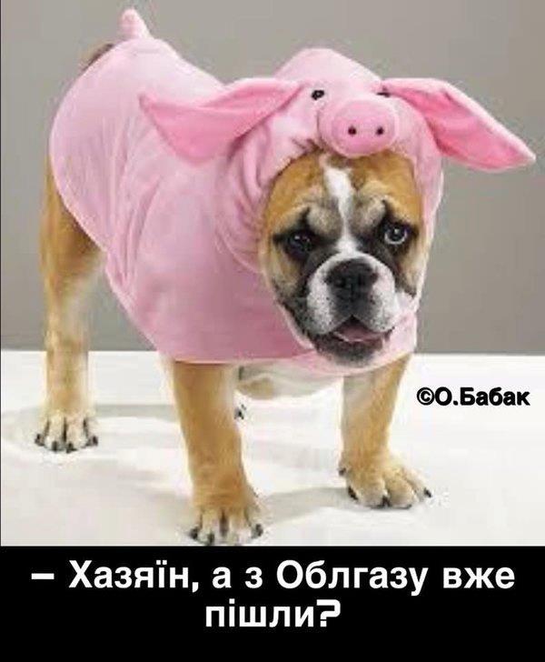 У соцмережах люто висміяли нардепа Брагара, який запропонував пенсіонерці розрахуватися за газ собакою 74