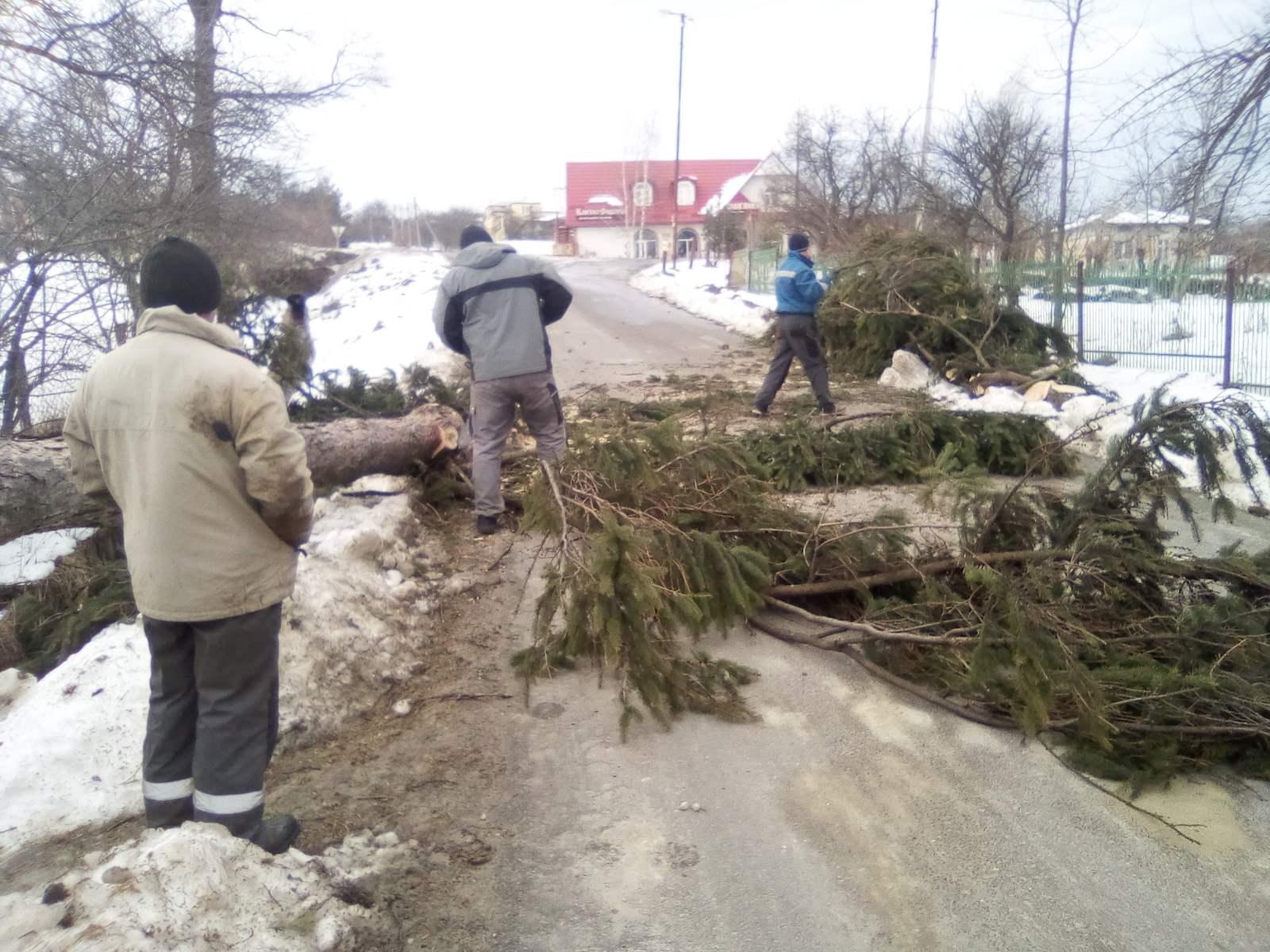 Негода на Прикарпатті: шквальний вітер зриває дахи і валить дерева у 5 районах 14
