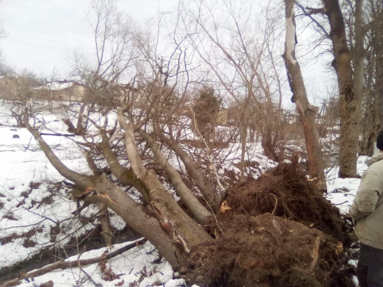 Негода на Прикарпатті: шквальний вітер зриває дахи і валить дерева у 5 районах 18