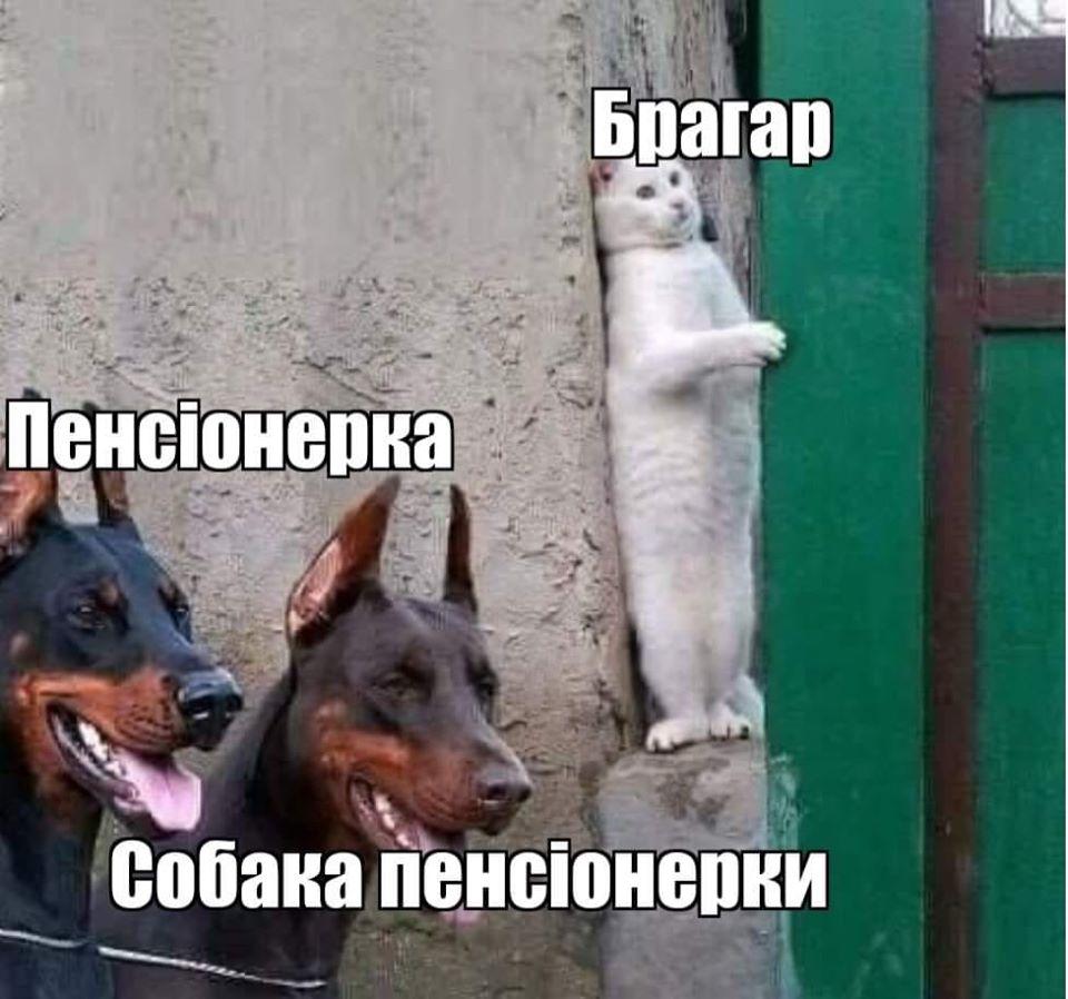 У соцмережах люто висміяли нардепа Брагара, який запропонував пенсіонерці розрахуватися за газ собакою 90