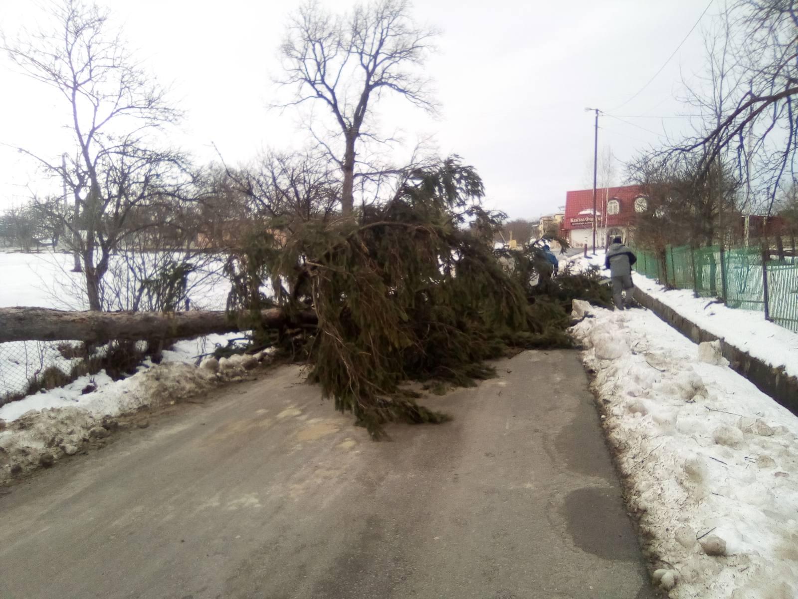 Негода на Прикарпатті: шквальний вітер зриває дахи і валить дерева у 5 районах 20