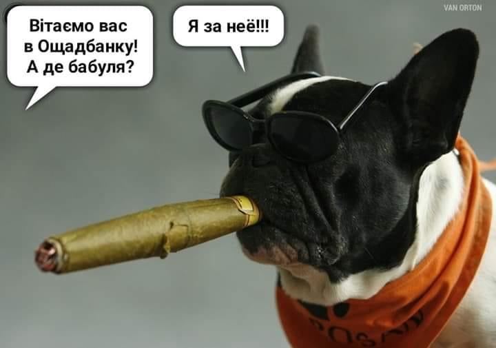 У соцмережах люто висміяли нардепа Брагара, який запропонував пенсіонерці розрахуватися за газ собакою 108