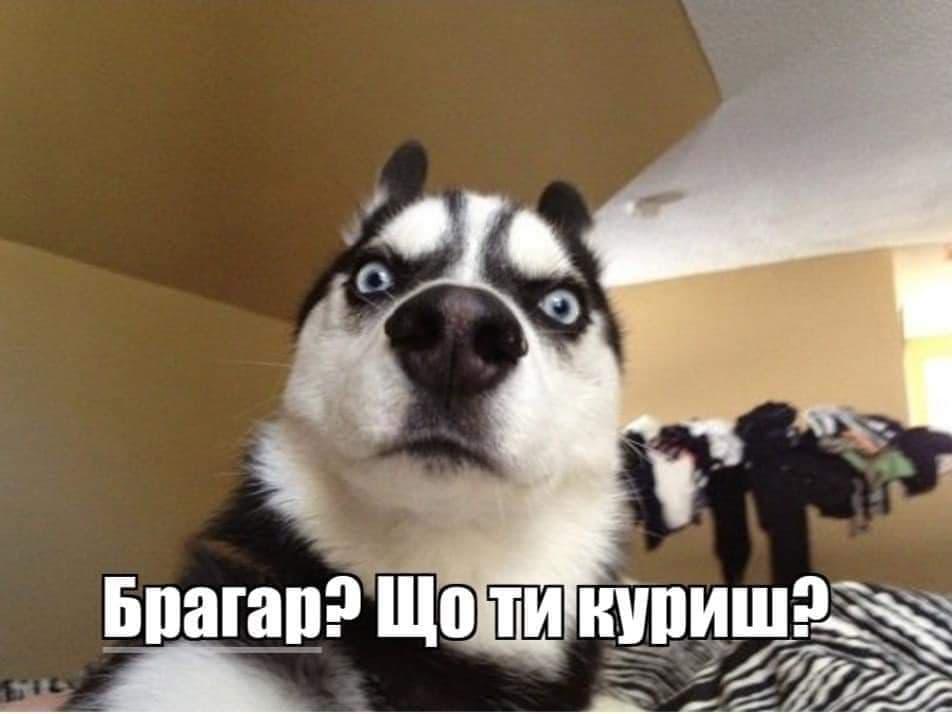 У соцмережах люто висміяли нардепа Брагара, який запропонував пенсіонерці розрахуватися за газ собакою 100