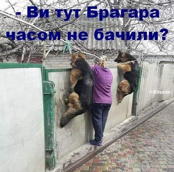 У соцмережах люто висміяли нардепа Брагара, який запропонував пенсіонерці розрахуватися за газ собакою 112