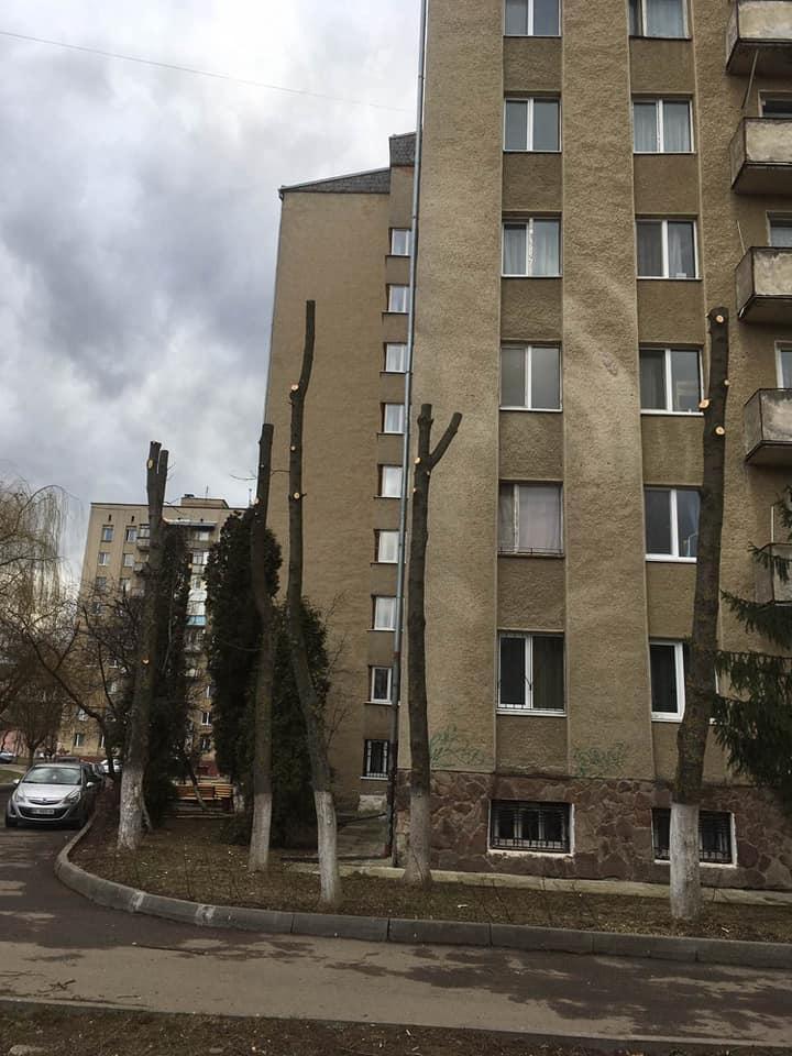 Кронування дерев в Івано-Франківську
