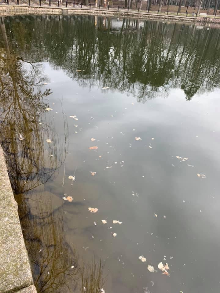 Цвіль і гниль: не годувати лебедів і качок хлібом просить дирекція франківського парку 1