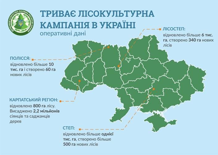 У Карпатах вже висаджено 2,2 млн дерев, – глава Держлісагентства 1