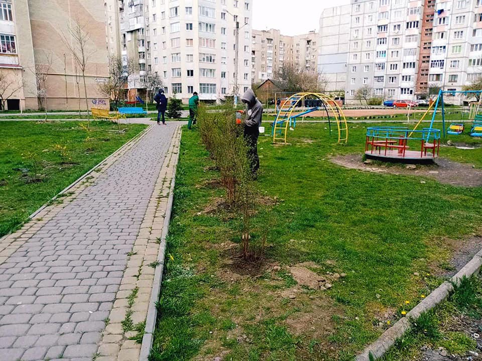У Франківську висадили дерева