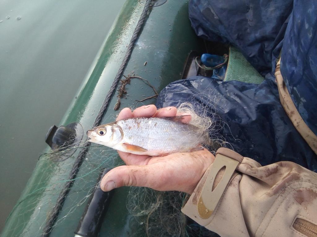 Рибпатруль на Дністрі знищив браконьєрські сітки