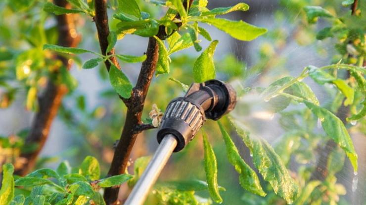 Коли найкраще обробляти плодові дерева весною