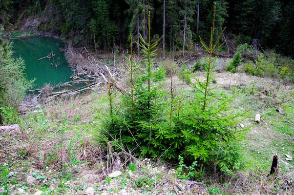 Через зсуви зникло озеро Криве у Карпатах 6