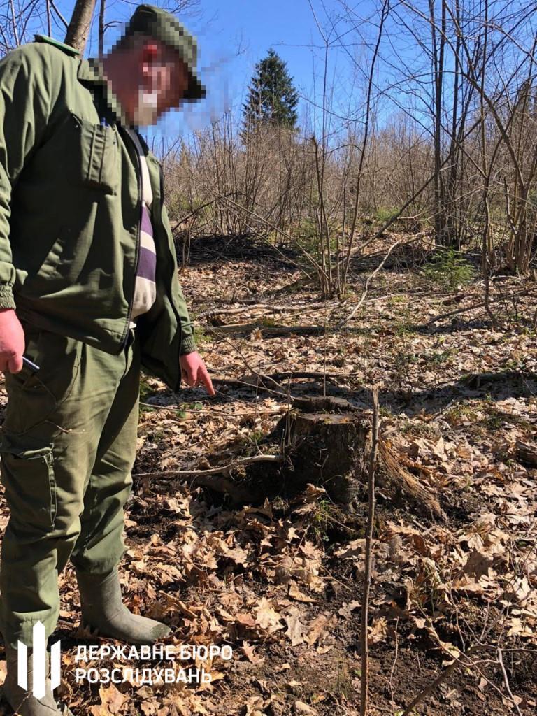 Посадовців Рогатинського лісгоспу підозрюють у незаконній рубці на 1,9 млн грн 1