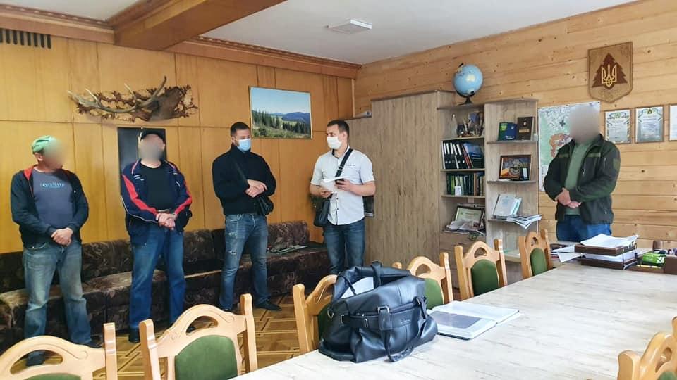 У лісгоспах Прикарпаття масові обшуки у справі про незаконну вирубку лісу. ФОТО 6