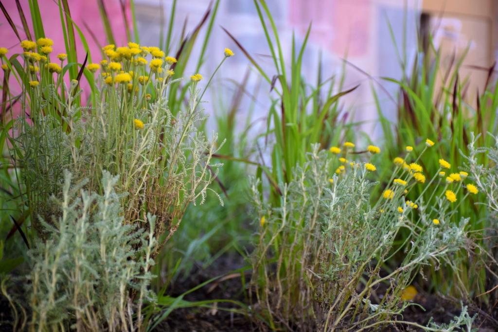 франківські комунальники висадили нові сорти трави