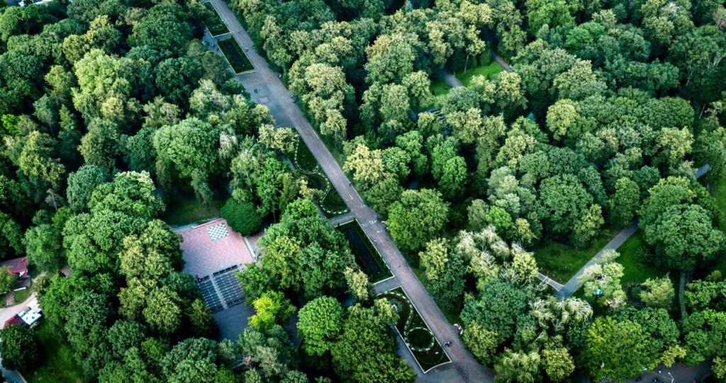 Франківська оаза: міський парк з висоти птахів 12