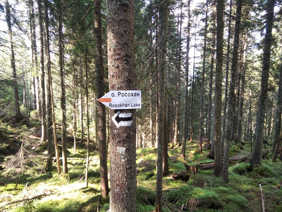 У Карпатах відновили маркування туристичного маршруту з Осмолоди на хребет Аршиця 4