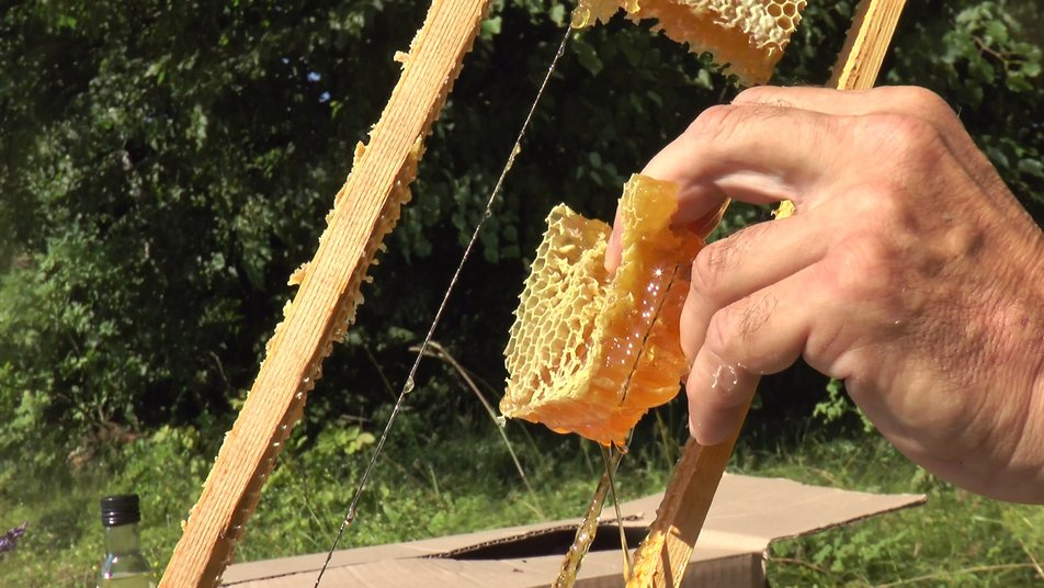 На Коломийщині збирають лавандовий мед 4