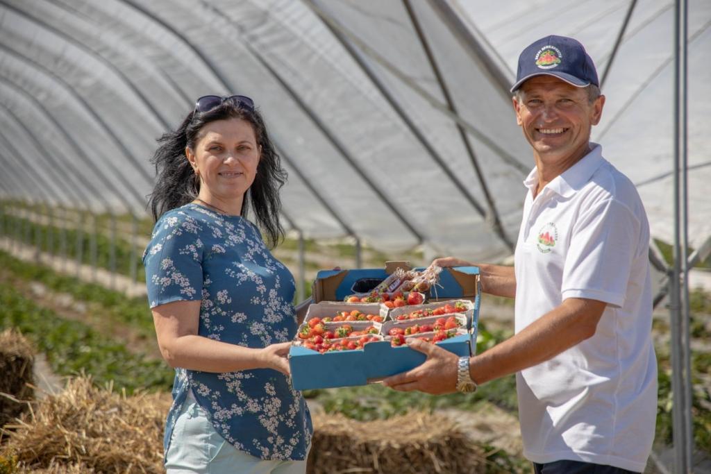"""Прикарпатський фермер влаштував фестиваль серпневої """"Полуниці на відкритому полі"""" 7"""