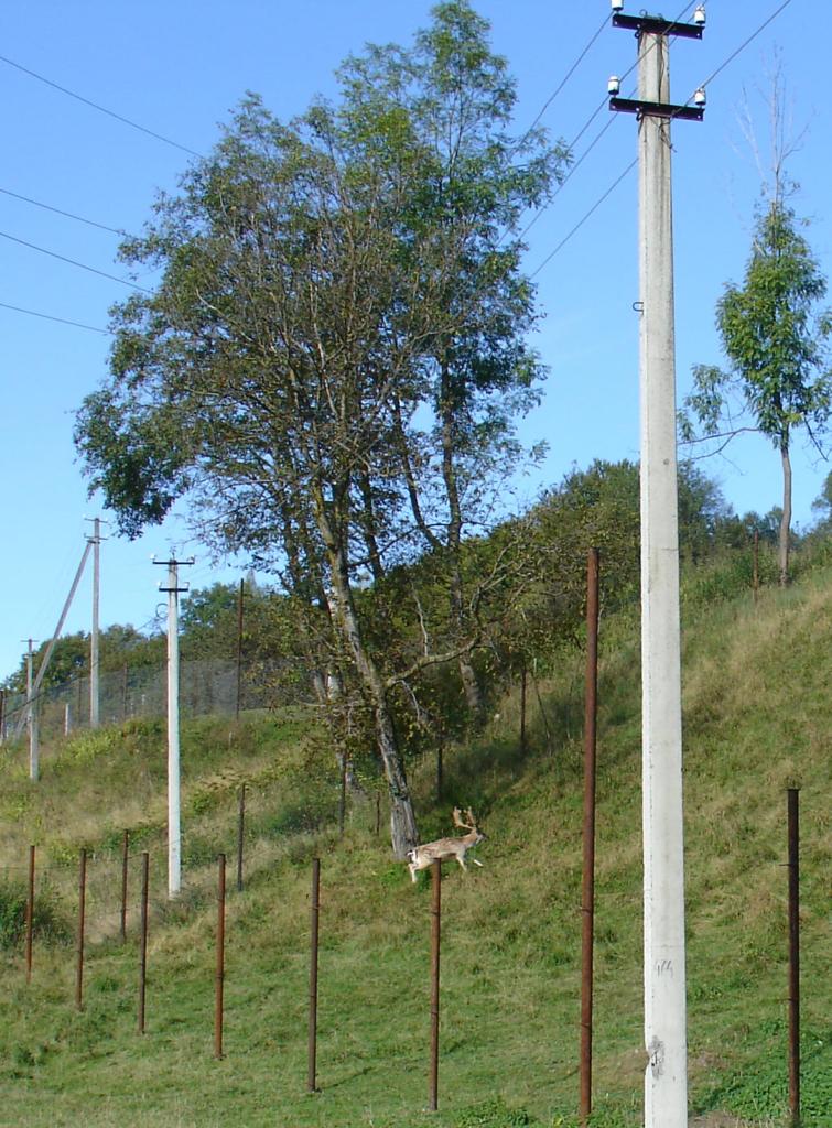 У приватногму обійсті на Косівщині прижилися олені і лані 3