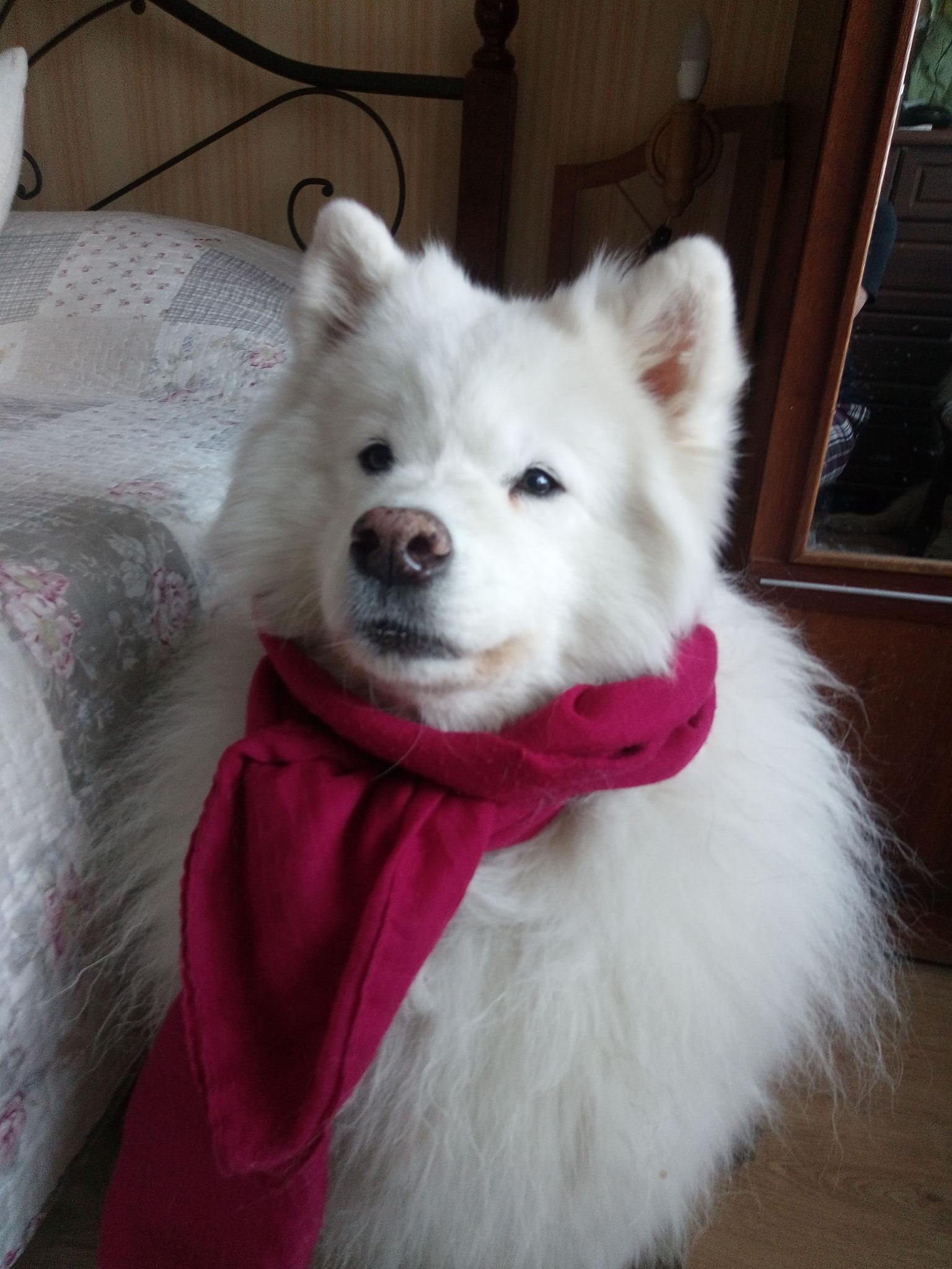 У Франківську невідомі масово труять собак: за інформацію про зловмисників оголосили винагороду 1