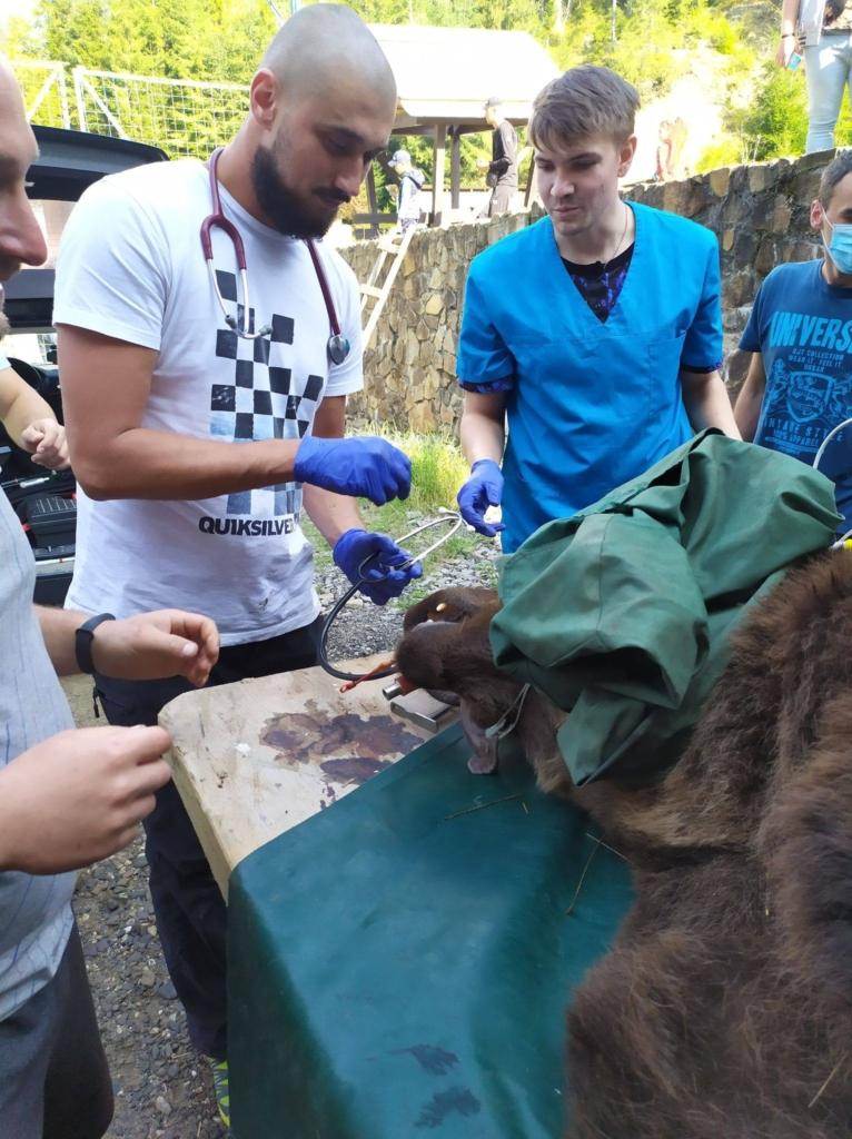 Франківські ветеринари пролікували зуби ведмедям у нацпарку 3
