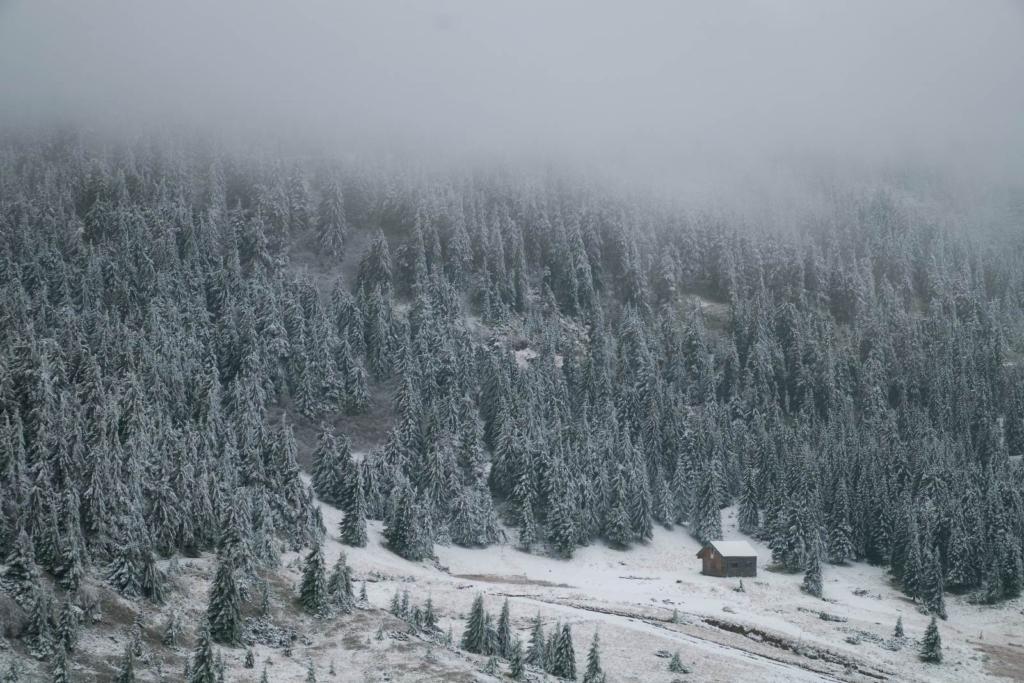 На Прикарпатті випав сніг. ФОТО, ВІДЕО 5