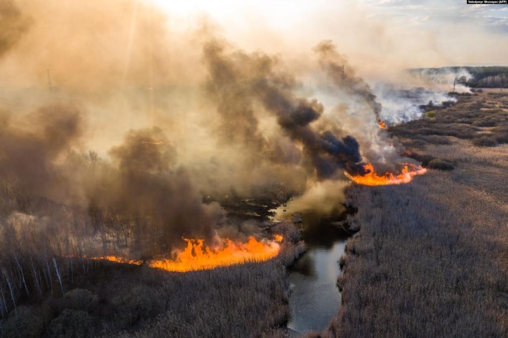 в україні згоріли 200 млн кубометрів лісу