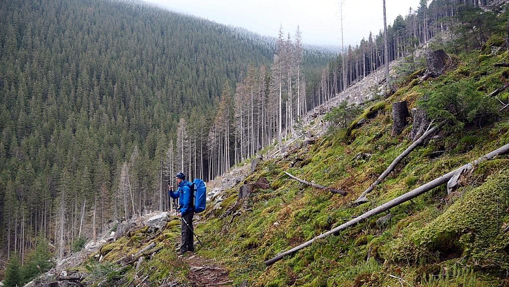 Хребет Аршиця - вирубка лісу