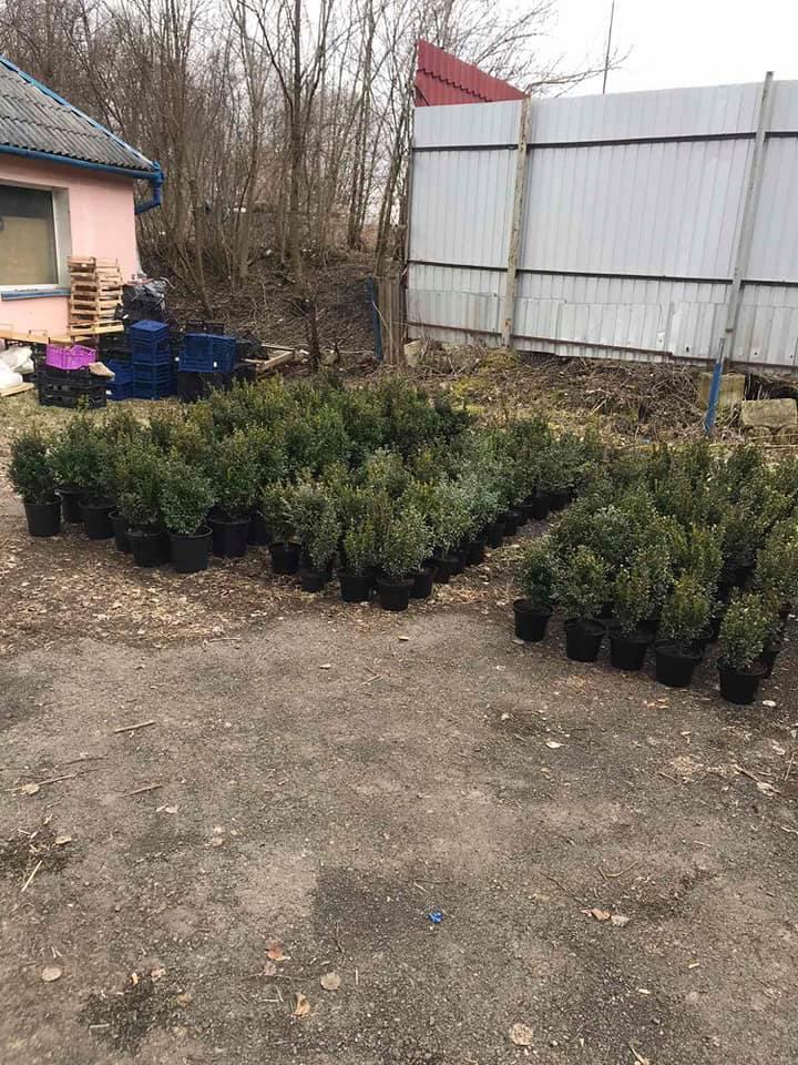 У Калуші обікрали агроцентр: забрали 200 туй, квіти та інструменти 1