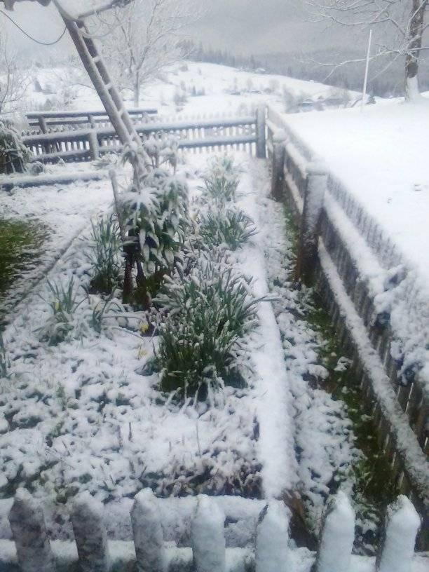 8 травня на Прикарпатті випав сніг 4
