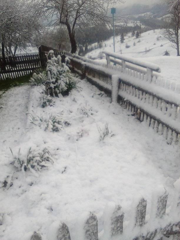 8 травня на Прикарпатті випав сніг 5