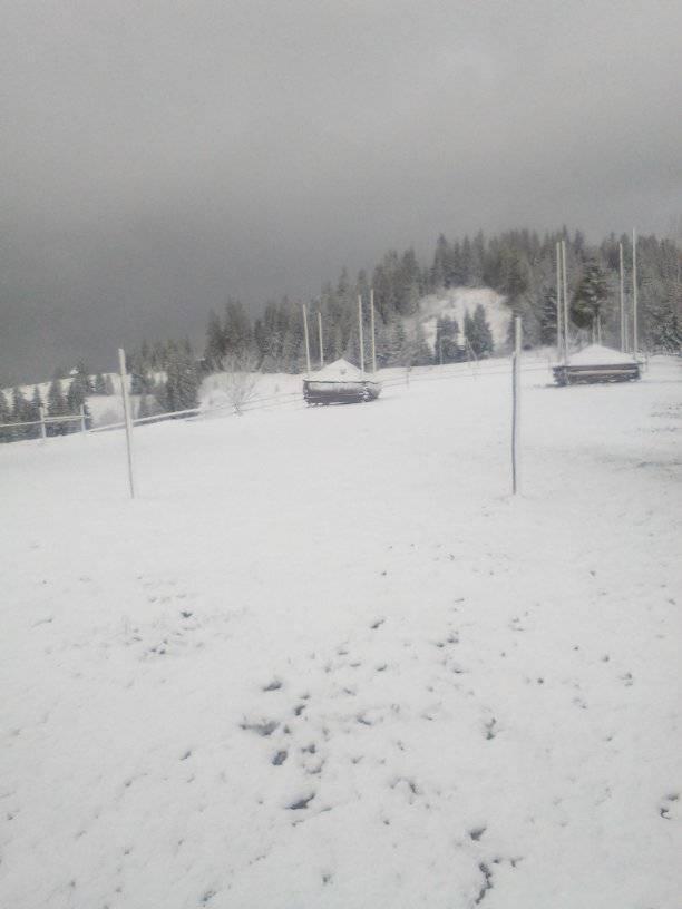 8 травня на Прикарпатті випав сніг 6